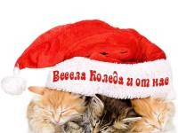 Весела Коледа и от нас
